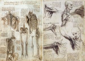 anatomy-of-human-body-da-vinci